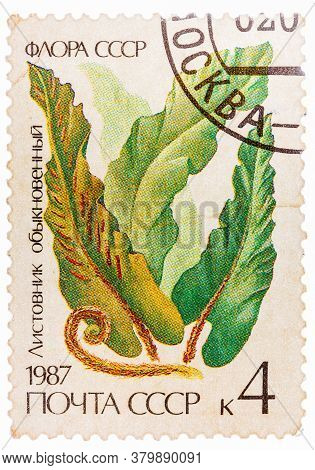 Russia - Circa 1987: Post Stamp Printed In Ussr Cccp, Soviet Union Shows Image Of Harts Tongue Fern