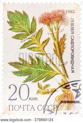 Ussr - Circa 1985: A Stamp From Ussr, Shows Medicinal Plant From Siberia, Circa 1985