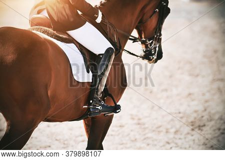 A Strong, Athletic Bay Horse With A Rider In The Saddle Canters Quickly Across The Sand, Illuminated