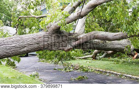 A Tree Fell Over A Residential Driveway And Is Balancing On The Electric Wires With Cable And Phone