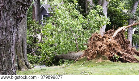 A Tree Is Blown Down During Tropical Storm Isaias Knocking Down Electric And Cable Wires And Tearing