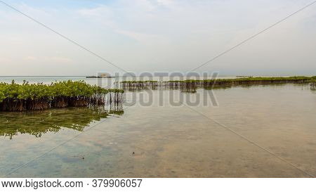 Mangrove Plantations On Pramuka Island, Thousand Islands, Indonesia