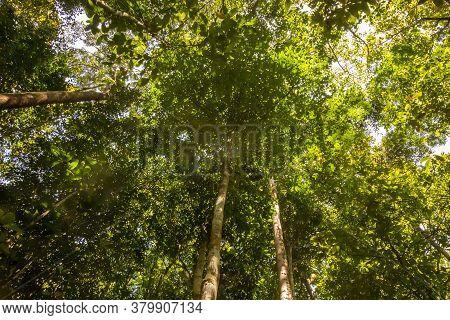 The Canopy Of A Secondary Rainforest On A Sunny Day, Taman Negara Rainforest, Malaysia