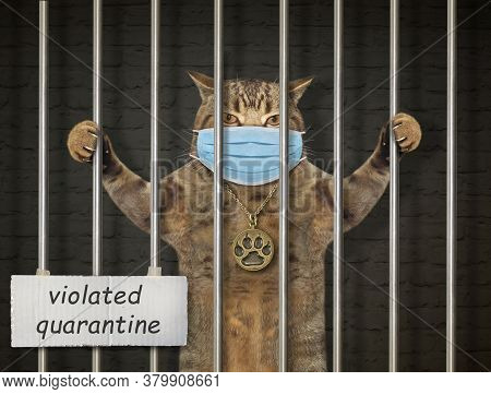The Beige Cat In A Protective Mask Is Behind Bars In The Prison. Violated Quarantine. Coronavirus.