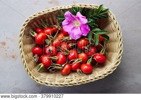 Rosehips and a wild rose flower