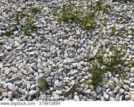 White Granite Stones, Small Pebbles Through Which The Grass Grows