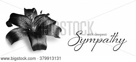 Sympathy Card With Dark Lily Flower Isolated On White Background