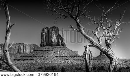 Black And White Photo Of The Red Sandstone Formation Of West Mitten Butte Behind A Dead Tree In Monu