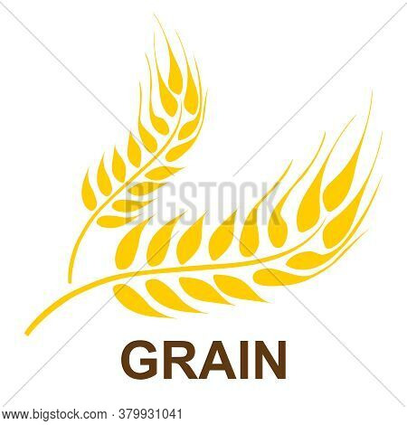 Ears Of Wheat. Background Image Of Ears Of Wheat Isolated On A White Background. Vector Illustration