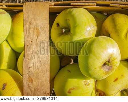 Fruit Apples Are Collected In A Wooden Box. Harvesting Apples In The Garden. Food Photo. Fruit Juice