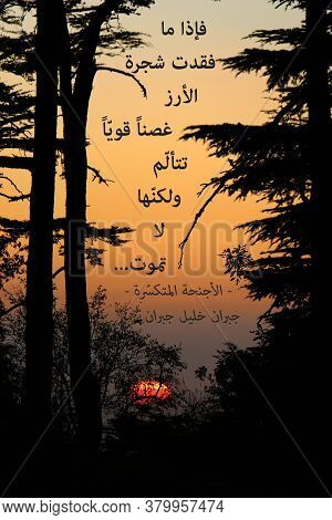 A Quote About The Cedar Tree By Gibran Khalil Gibran That Means: If The Cedar Tree Loses One Strong