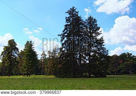 Picturesque Nature Landscape View Of Large Lawn With Trees Against Blu Sky. It Is One Of The Most Fa