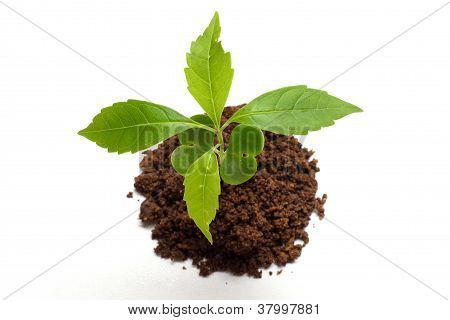 Plant Growing From Soil- Beginning