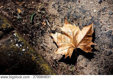Dry Fallen Leaf On The Pavement On A Sunny Autumn Day