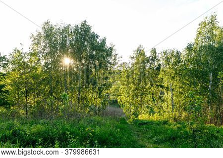Sunset Or Dawn In A Spring Birch Forest With Bright Young Foliage Glowing In The Rays Of The Sun, Sh