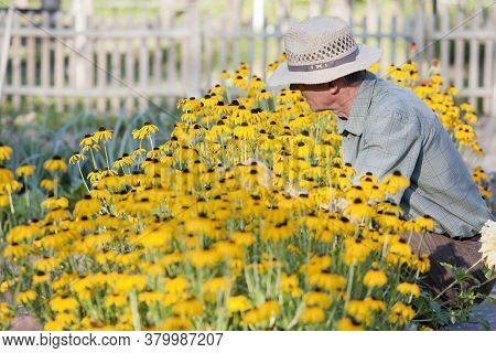 Senior Gardener Looking At Yellow Flowers In A Flowerbed In A Garden In The Morning Light
