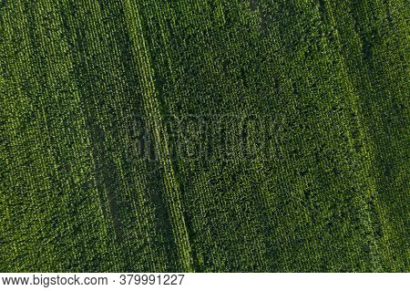 Green abstract image of diagonal lines from different crops in field, shoot from drone directly above ground. Corn field background