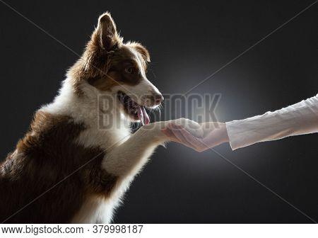 Dog Paw In Woman Hand Dog Training