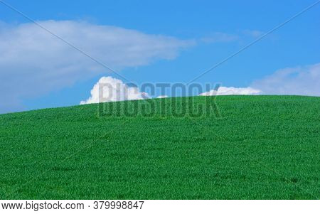 abstract rural landscape of a Sicily hill with green grass and at horizon blue sky and white clouds