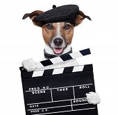 movie clapper board director dog doing action poster