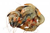 King tiger shrimps raw in pile isolated on white poster