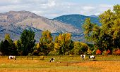 Autumn on the Front Range in Boulder Colorado poster