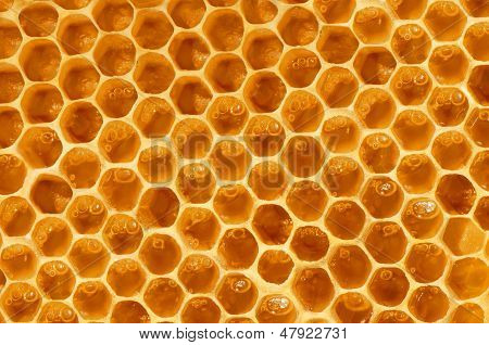Unfinished Honeycombs