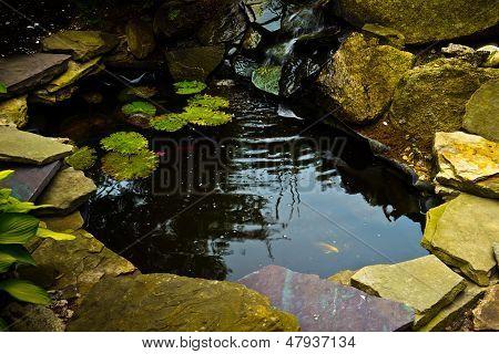 Koi Pond With Rocks