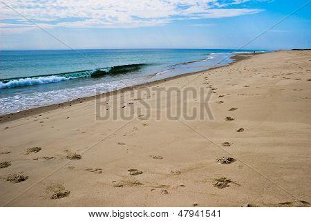 Footprints On A Cape Cod Beach