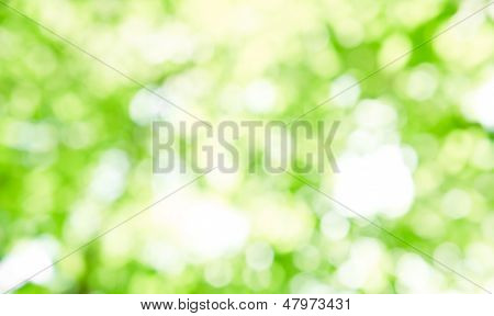 Natural outdoors bokeh in green and yellow tone poster