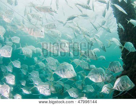 Atlantic Ocean Species Of Fish