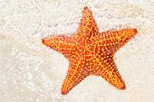 Starfish (sea star) near the sandy shore of a tropical beach poster