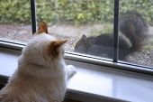 cat watching a squirrel through the window poster