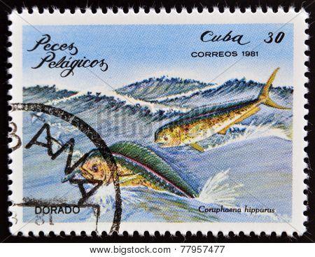 CUBA - CIRCA 1981: A Stamp printed in Cuba shows a Dorado with the inscription