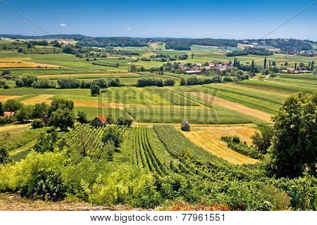 Beautiful Green Landscape In Kalnik Vineyard Area