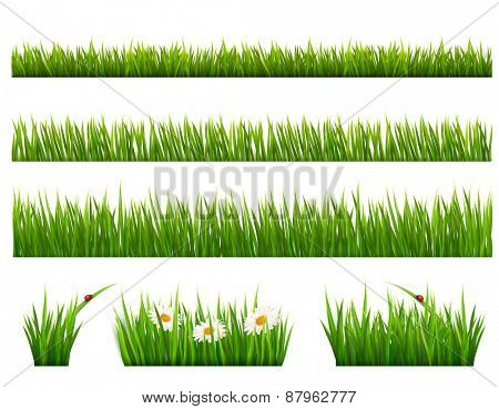 Big collection of green grass. Vector.