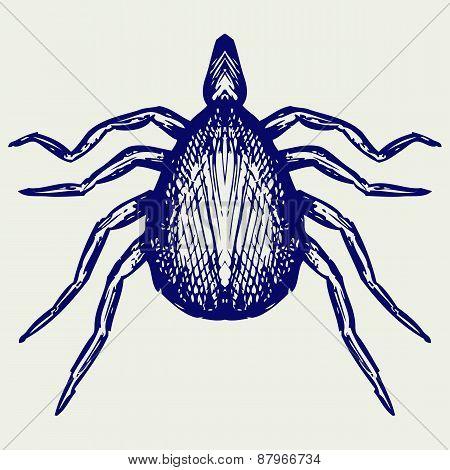 Mite bug