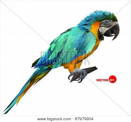 Ara colorful macaw parrot sitting on a wooden stick