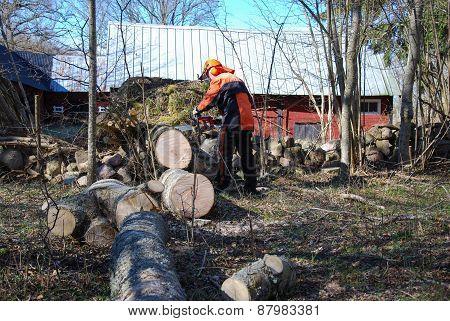 Lumberjack At A Wind Fallen Tree