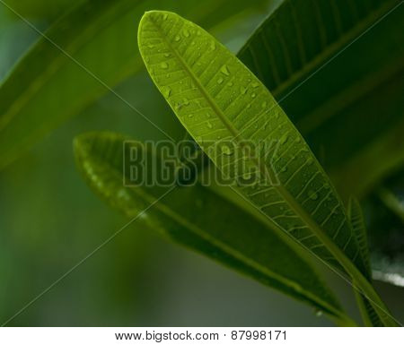 Close up of a green leaf with dew drop. An abstract nature background. blur