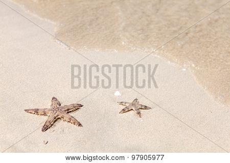 Seastars on the sand of the sea beach
