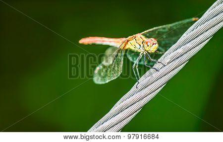 Dragonfly, Blur Background