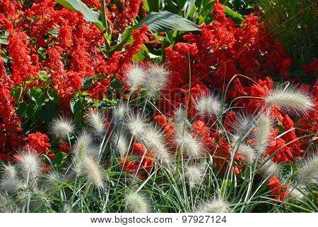 Spring Garden Fountain Grass