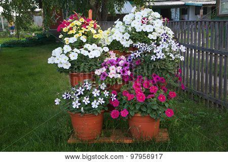 Stair Decoration Design Petunia Flower Garden