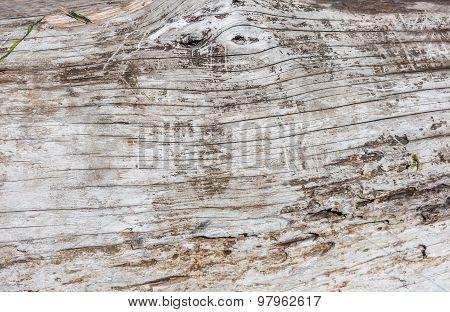 Driftwood Background 2