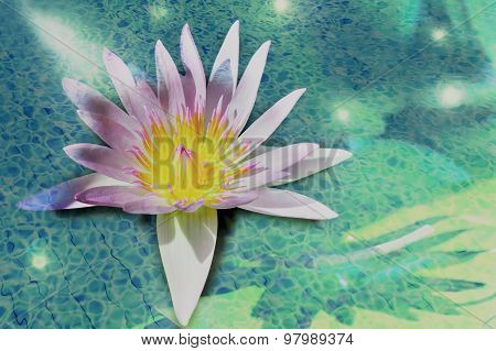 Double Exposure,lotus With Light Of Water Pool.