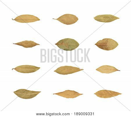 Single dried bay leaf isolated over the white background, set of twelve different foreshortenings