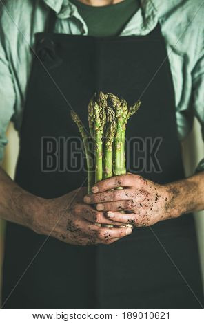 Bunch of fresh uncooked seasonal green asparagus in dirty farmer's hands, selective focus, vertical composition. Gardening and local farmer's market concept