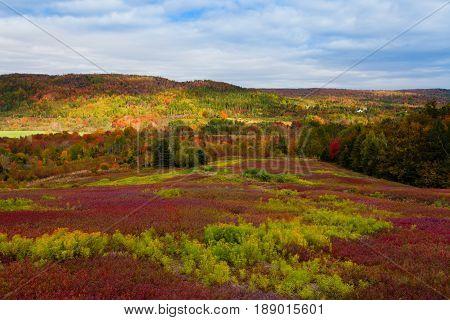 Nova Scotia Canada Blueberry Field Fall Forest