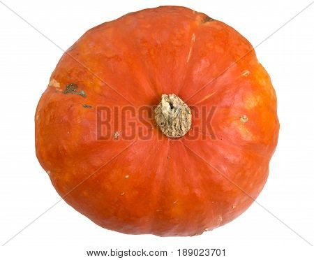 The orange kabocha is a variety of winter squash looking like a squat pumpkin with mottled outer texture and beautiful golden flesh.